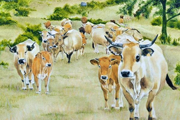 Gaushala — Cowshed